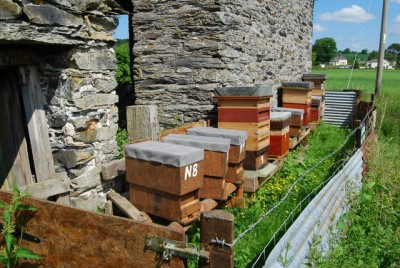 uk apiary e1355585618689 Beekeeping Apiary Creating Yours