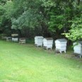 An Irish Apiary