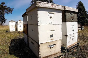 bee farm Bee Farming For the Experienced Beekeeper and Beginner