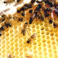 Bees on a Comb - Beekeeping Made Easy