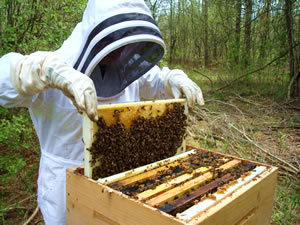 beekeeping suit Beekeeping Suits Why It is necessary to have One?