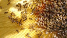 How to Keep Bee Pollen Fresh